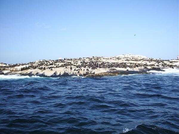 Нажмите на изображение для увеличения.  Название:AF-077 Seal Isl.jpg Просмотров:9 Размер:1.61 Мб ID:216324