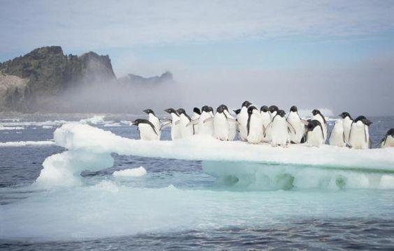 Название: Пингвины на льдине_bdaa14780cf401d56fc99b338e2193ee.jpg Просмотров: 213  Размер: 24.7 Кб