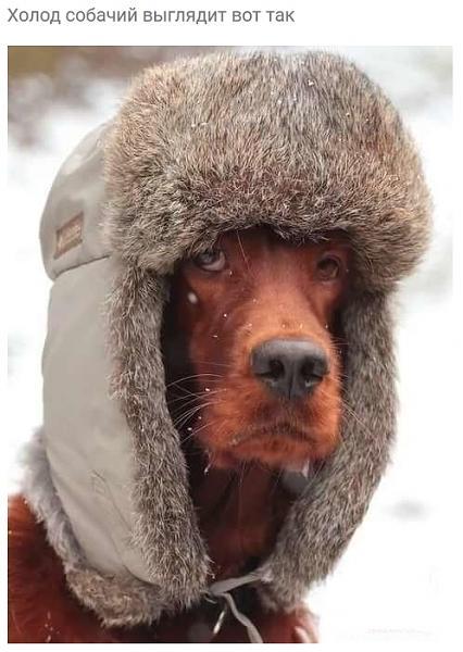 Нажмите на изображение для увеличения.  Название:Холод собачий выглядит вот так.jpg Просмотров:23 Размер:182.9 Кб ID:227323