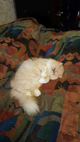 Нажмите на изображение для увеличения.  Название:cat1.jpg Просмотров:10 Размер:352.6 Кб ID:230745