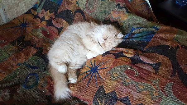Нажмите на изображение для увеличения.  Название:cat2.jpg Просмотров:7 Размер:455.1 Кб ID:230746