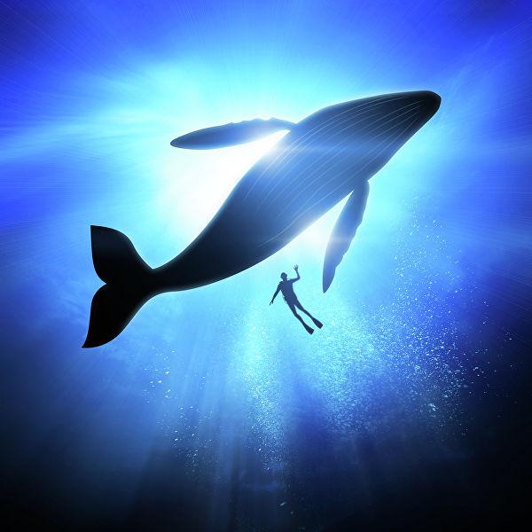 Название: Аквалангиси и кит.jpg Просмотров: 698  Размер: 50.5 Кб