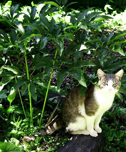 Нажмите на изображение для увеличения.  Название:cat_001.jpg Просмотров:3 Размер:321.9 Кб ID:235505