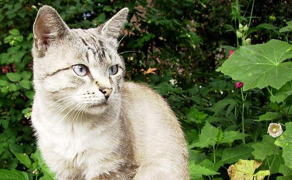 Нажмите на изображение для увеличения.  Название:cat_004.jpg Просмотров:8 Размер:313.1 Кб ID:236727