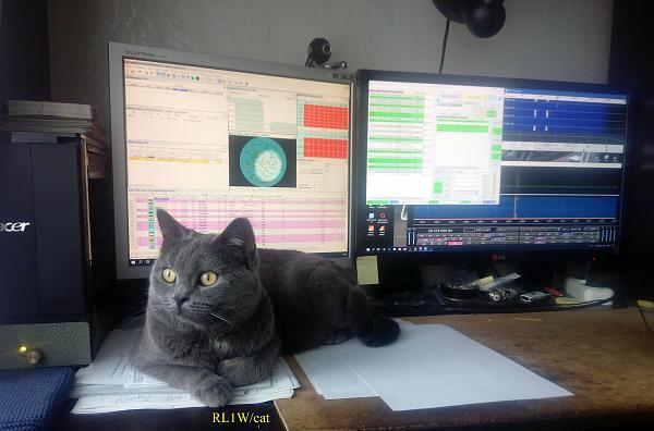 Нажмите на изображение для увеличения.  Название:rl1w_cat.jpg Просмотров:15 Размер:952.6 Кб ID:237002