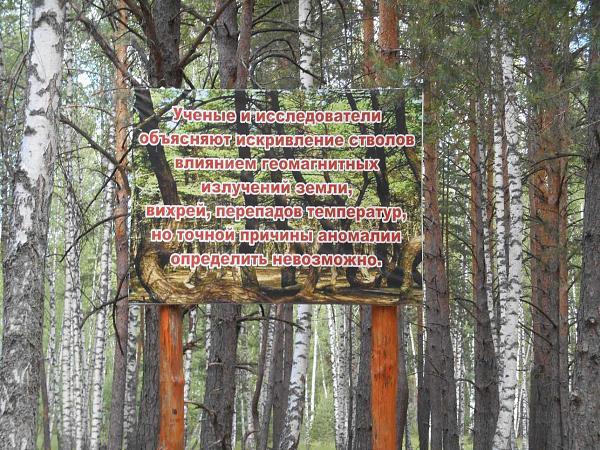 Нажмите на изображение для увеличения.  Название:Пьяный лес 16 06 2018   050.jpg Просмотров:0 Размер:265.5 Кб ID:237776