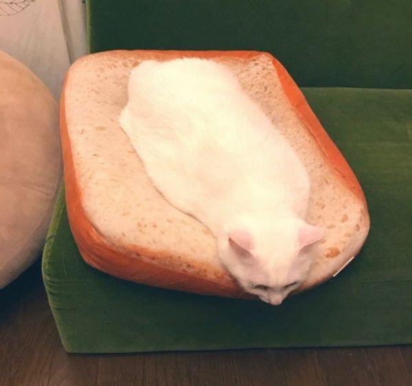 Название: cat.jpg Просмотров: 2746  Размер: 30.9 Кб
