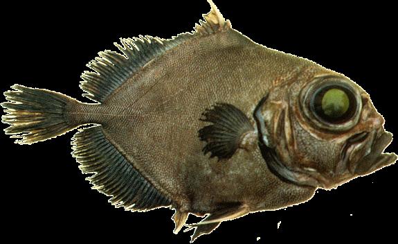 Название: рыба дори.png Просмотров: 737  Размер: 330.0 Кб