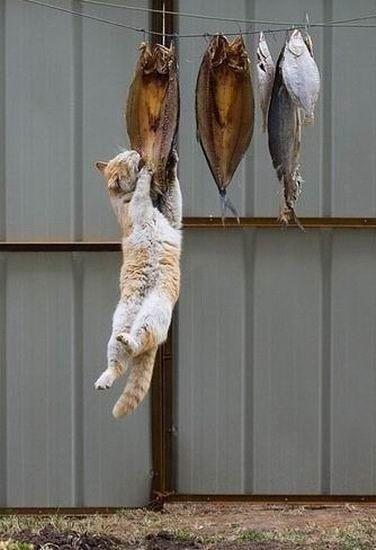 Название: Рыбный кот.jpg Просмотров: 2223  Размер: 35.8 Кб