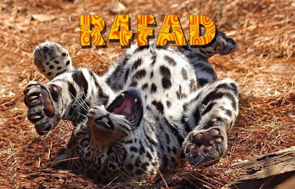 Название: r4fad_fs.jpg Просмотров: 580  Размер: 74.8 Кб