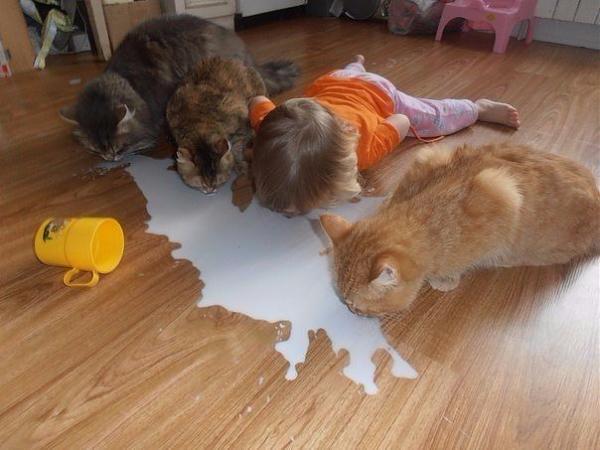 Нажмите на изображение для увеличения.  Название:молоко.jpg Просмотров:43 Размер:52.9 Кб ID:266922