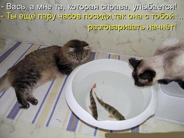 Нажмите на изображение для увеличения.  Название:коты.jpg Просмотров:4 Размер:78.7 Кб ID:292462