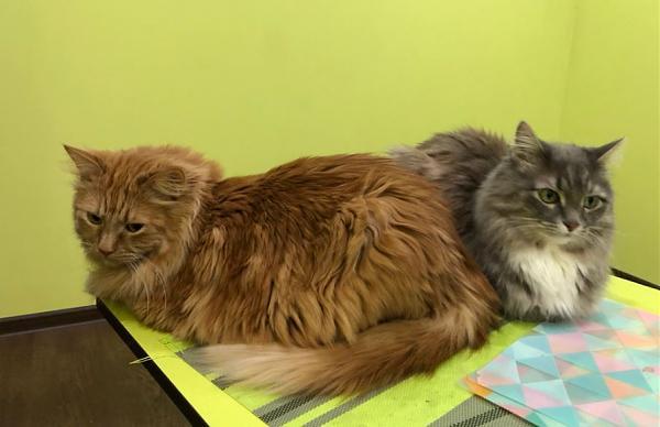 Нажмите на изображение для увеличения.  Название:коты.JPG Просмотров:3 Размер:60.5 Кб ID:301627