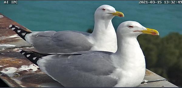 Нажмите на изображение для увеличения.  Название:чайки 10.jpg Просмотров:4 Размер:119.8 Кб ID:302048