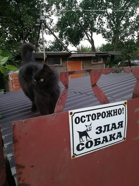 Нажмите на изображение для увеличения.  Название:Злая собака.jpg Просмотров:10 Размер:129.7 Кб ID:312612