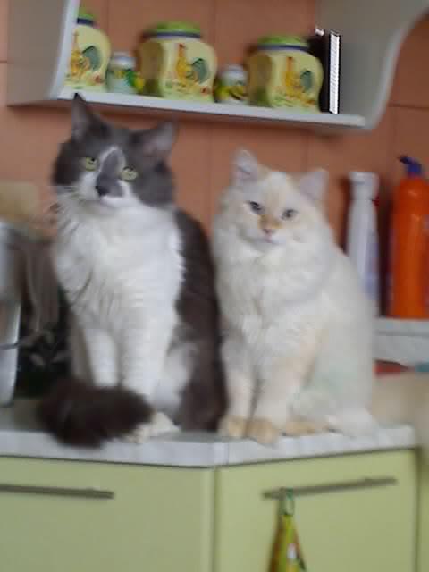 Нажмите на изображение для увеличения.  Название:Коты.jpg Просмотров:286 Размер:32.8 Кб ID:42046