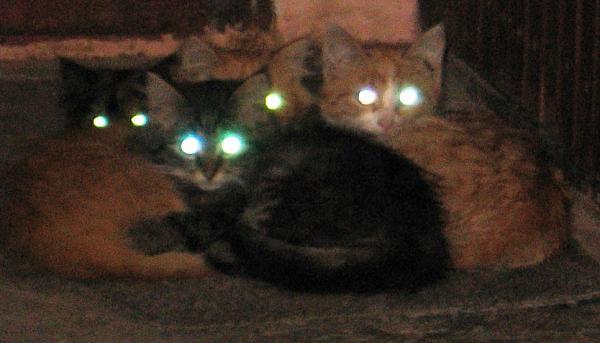 Нажмите на изображение для увеличения.  Название:котики_в подъезде.jpg Просмотров:178 Размер:141.8 Кб ID:42097