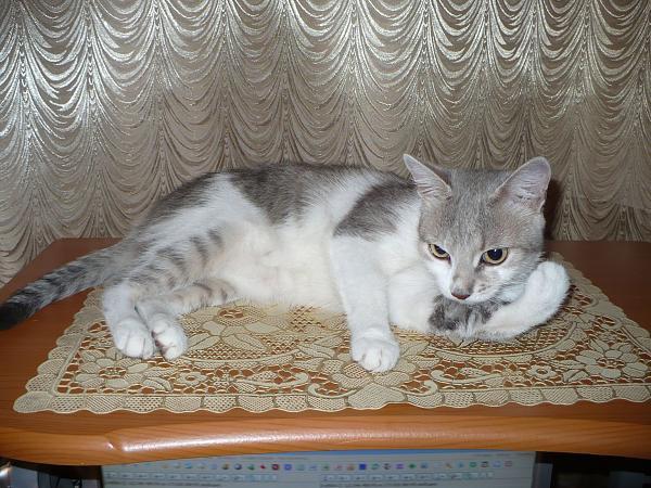 Нажмите на изображение для увеличения.  Название:my_cat.jpg Просмотров:98 Размер:389.0 Кб ID:53523