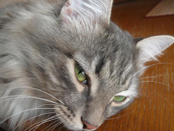 Нажмите на изображение для увеличения.  Название:кот.jpg Просмотров:118 Размер:2.46 Мб ID:54048