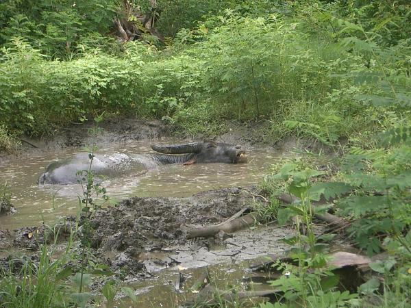Нажмите на изображение для увеличения.  Название:Грязевые ванны для Black Buffalo.JPG Просмотров:94 Размер:217.8 Кб ID:55151