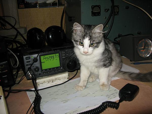 Нажмите на изображение для увеличения.  Название:radiokot2.JPG Просмотров:146 Размер:634.5 Кб ID:55554