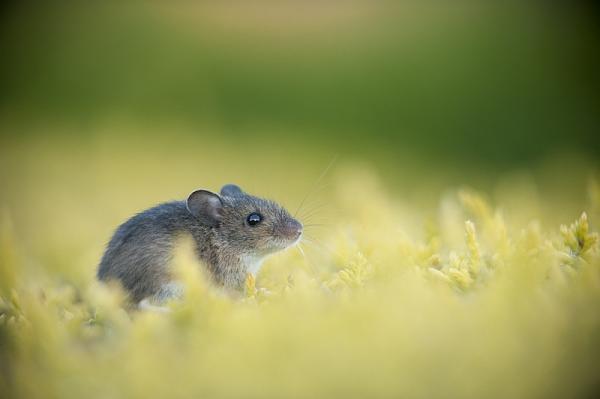 Нажмите на изображение для увеличения.  Название:british_wildlife_photography_10.jpg Просмотров:132 Размер:44.8 Кб ID:55601