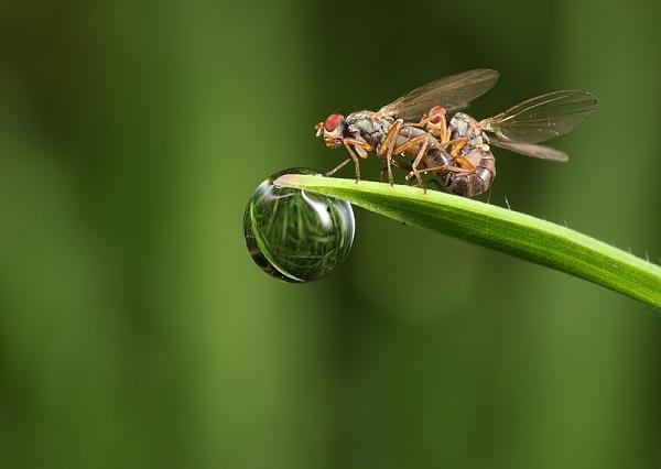 Нажмите на изображение для увеличения.  Название:british_wildlife_photography_11.jpg Просмотров:118 Размер:51.2 Кб ID:55602
