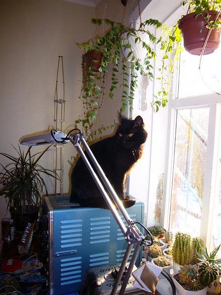 Нажмите на изображение для увеличения.  Название:Кот на осциллографе.jpg Просмотров:152 Размер:159.1 Кб ID:56434