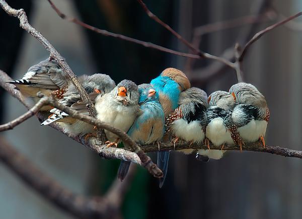 Нажмите на изображение для увеличения.  Название:birds.jpg Просмотров:162 Размер:282.3 Кб ID:64384