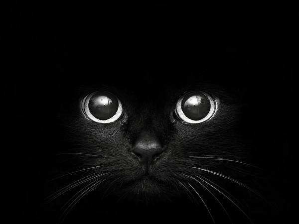 Нажмите на изображение для увеличения.  Название:Черный кот.JPG Просмотров:182 Размер:80.2 Кб ID:70617