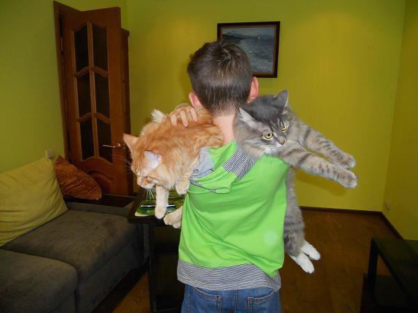 Нажмите на изображение для увеличения.  Название:коты.jpg Просмотров:86 Размер:368.0 Кб ID:84602