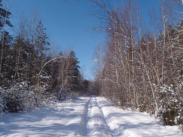 Нажмите на изображение для увеличения.  Название:дорога в лесу.jpg Просмотров:79 Размер:1.01 Мб ID:89770