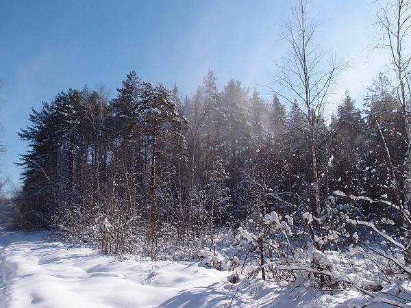 Нажмите на изображение для увеличения.  Название:сдуло с веток снег.jpg Просмотров:94 Размер:875.9 Кб ID:89771