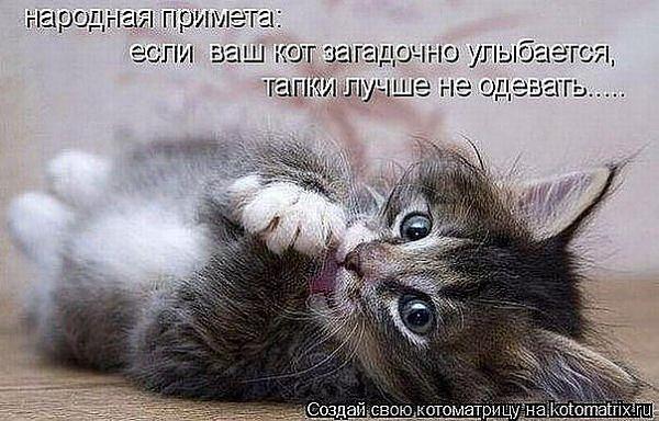 Нажмите на изображение для увеличения.  Название:Кот и тапки .jpeg Просмотров:104 Размер:60.9 Кб ID:91698
