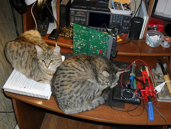 Нажмите на изображение для увеличения.  Название:K2_cats.jpg Просмотров:173 Размер:296.2 Кб ID:91863