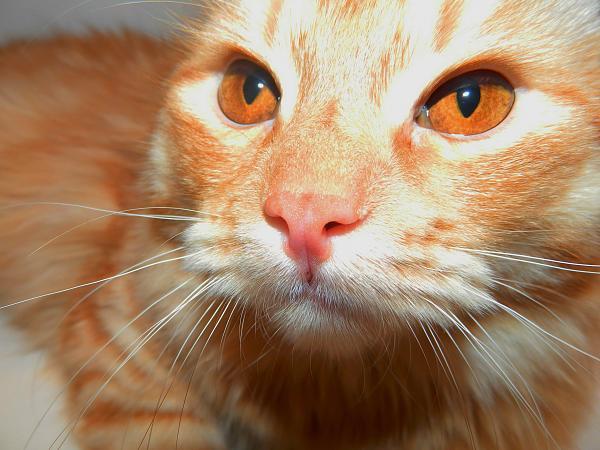 Нажмите на изображение для увеличения.  Название:Медный кот Сема.jpg Просмотров:90 Размер:768.4 Кб ID:93566