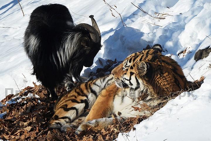 http://forum.qrz.ru/attachments/278-drugie-hobbi/156568d1453788635t-zveryo-moyo-big.jpg